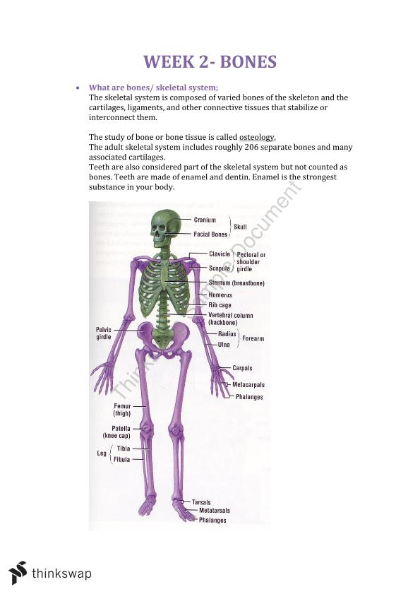 Introduction to Anatomy Week Two Study Notes | 300825 - Introduction ...