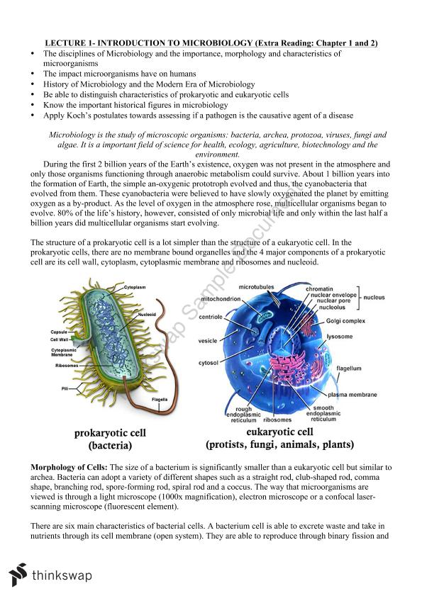 Microbiology and Immunology Notes