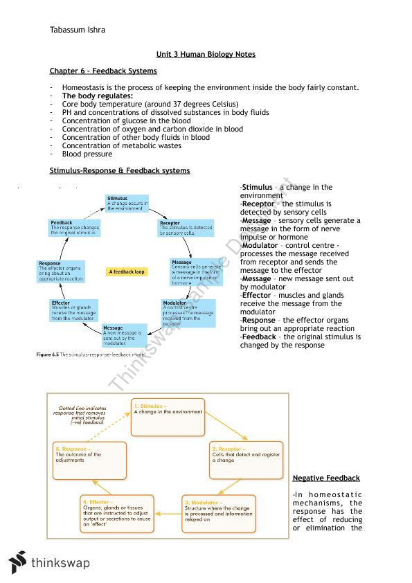 Full Homeostasis Human Biology Unit 3 Notes Year 12 Wace Human