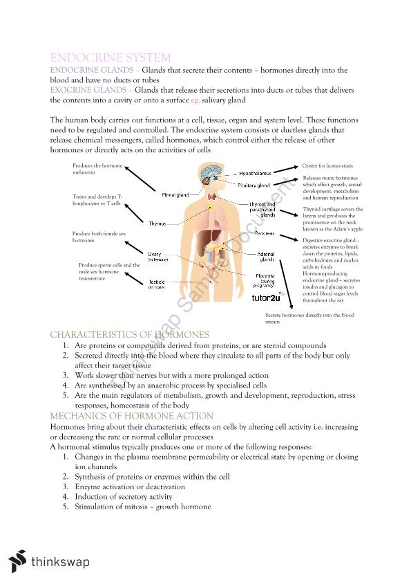 Endocrine System Human Biology Notes Year 12 WACE