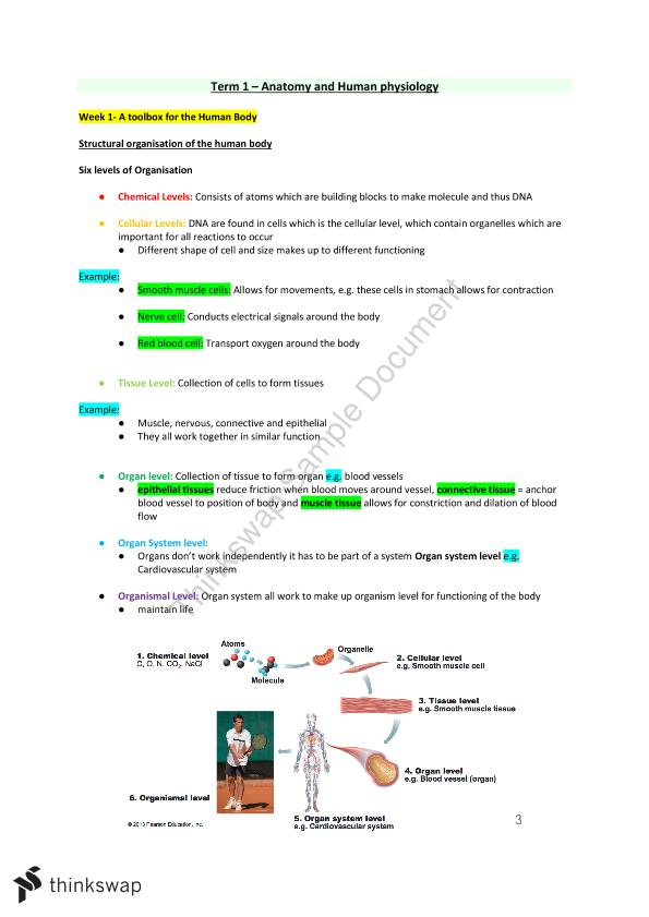 Foundations of Anatomy and Physiology Week 1-7 Notes