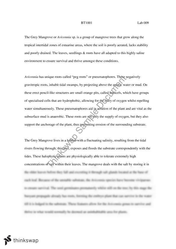 mangrove field trip essay talk bt introduction to plant  mangrove field trip essay talk