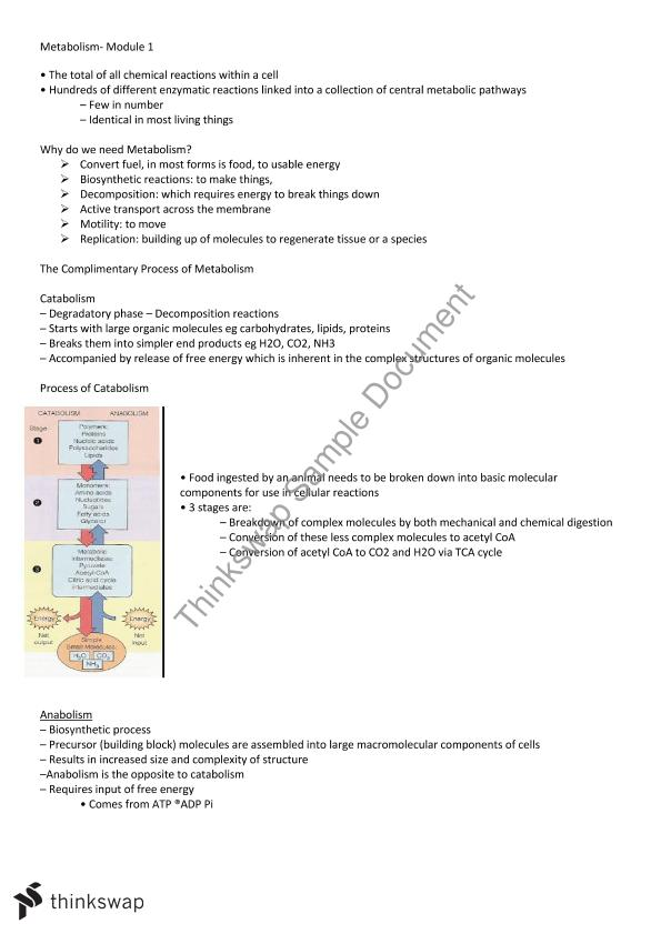 Metabolism Full Class Notes