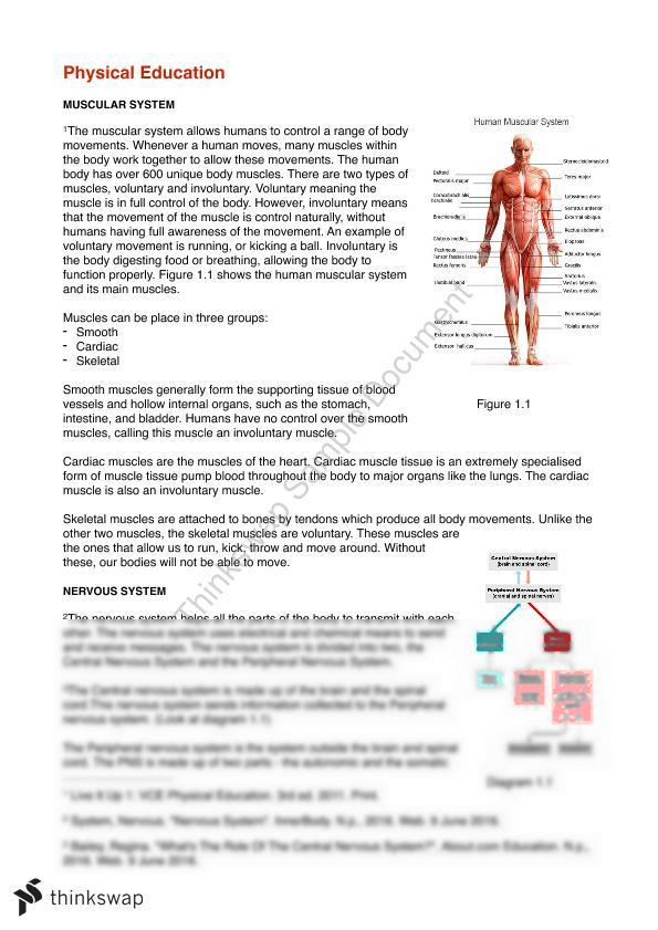 Human Body Systems Analysis Year 11 Sace Physical Education