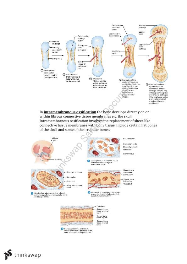 Introduction To Anatomy Week Two Study Notes 300825 Introduction
