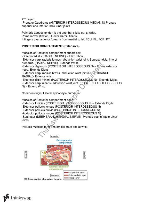 Human Anatomy B Notes | HBS2HAB - Human Anatomy B | Thinkswap