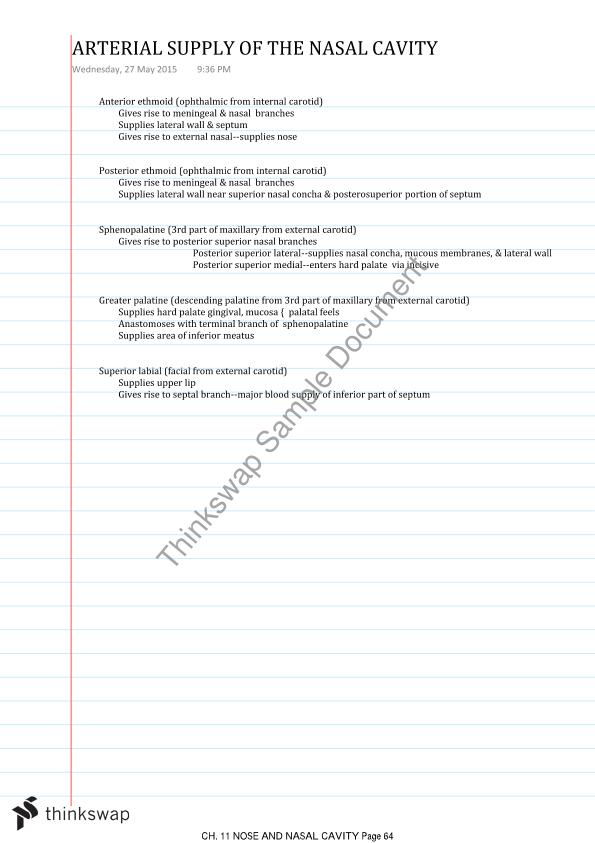 Head and Neck Anatomy Notes Year 2 Semester 1 Content | DOH251 ...