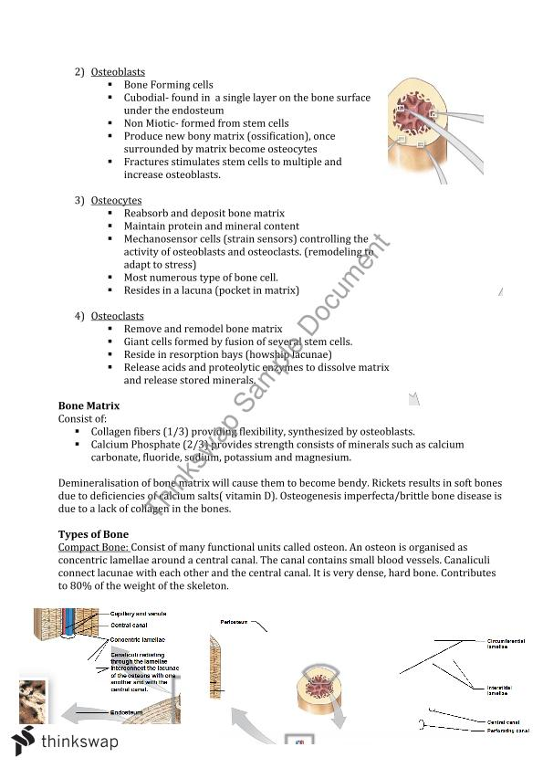 Notes on Human Anatomy and Physiology (HAP) | 91400 - Human Anatomy ...