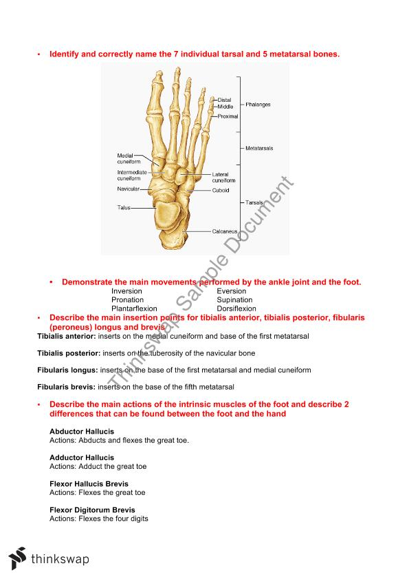 Musculoskeletal Anatomy Complete Study Notes - condensed   HUBS1105 ...