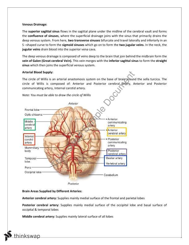 ANAT3022 Course Notes Week 1-6 | ANAT3022 - Functional Neuroanatomy ...