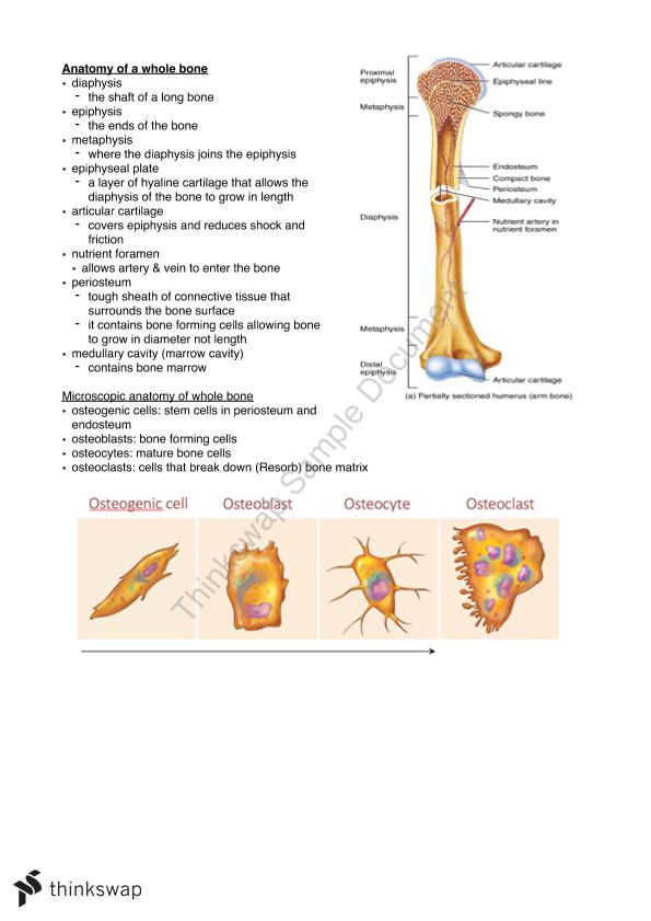 Human Structure And Function Full Study Notes Bms100 Human
