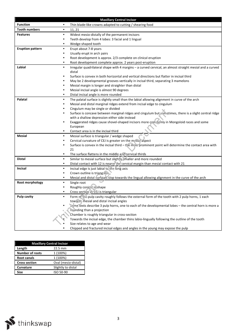 Study Notes On Tooth Morphology Ds1002 Introduction To Dental