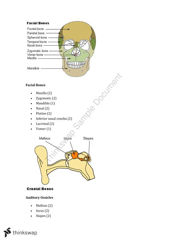 Introduction to Anatomy Week Two Study Notes   300825 - Introduction ...