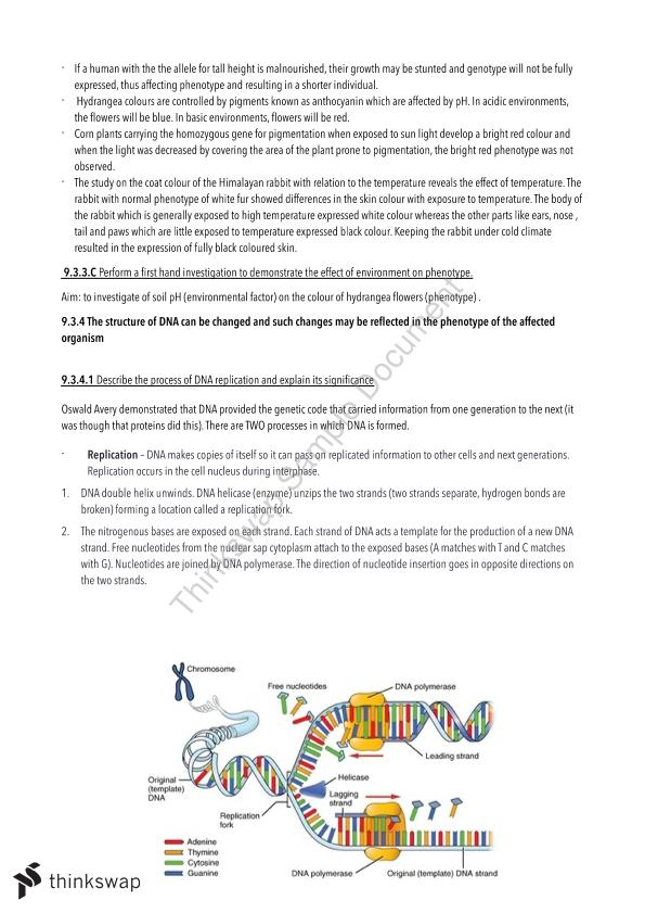 Hsc biology blueprint of life notes year 12 hsc biology thinkswap hsc biology blueprint of life notes malvernweather Images