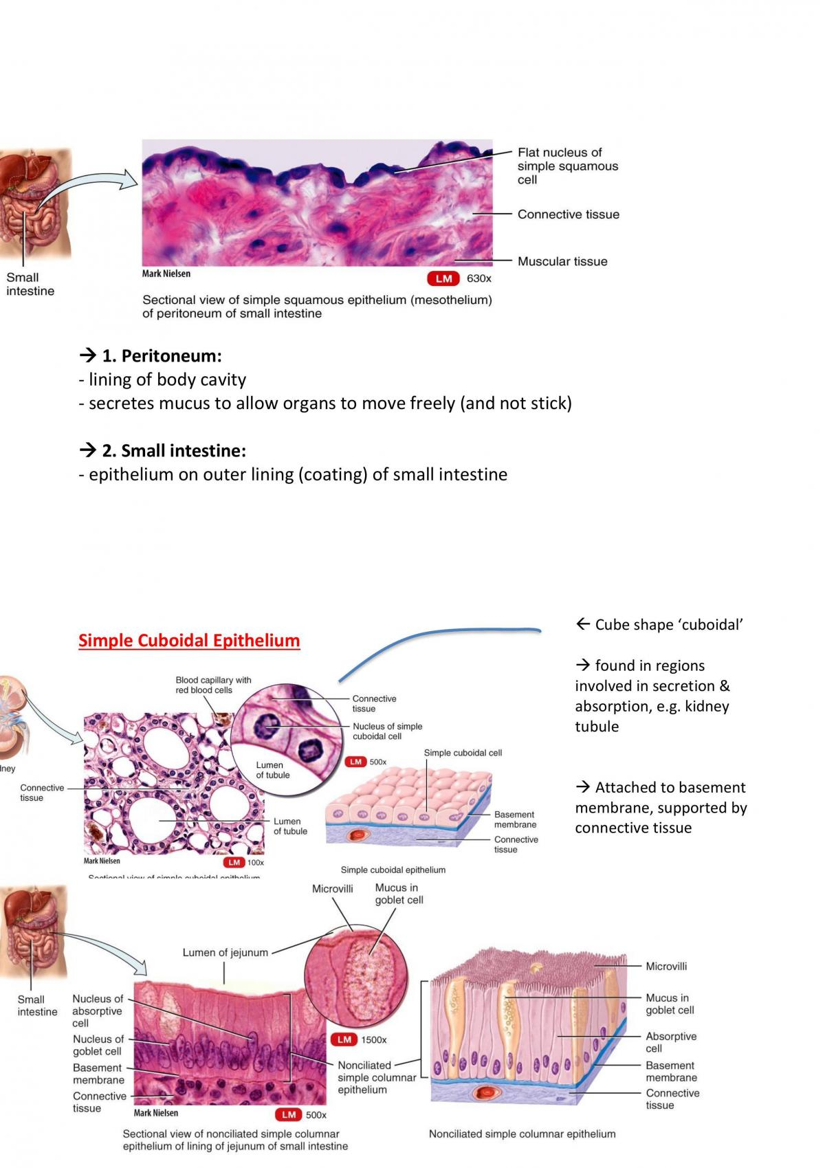 HUBS1403- Biomedical Science Part 1: First 16 Lecture Notes - Page 58