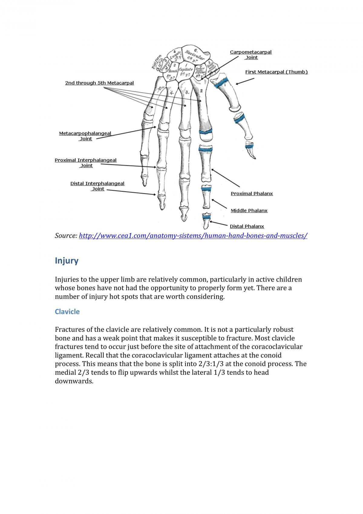 Bones and Joints Notes - Page 23